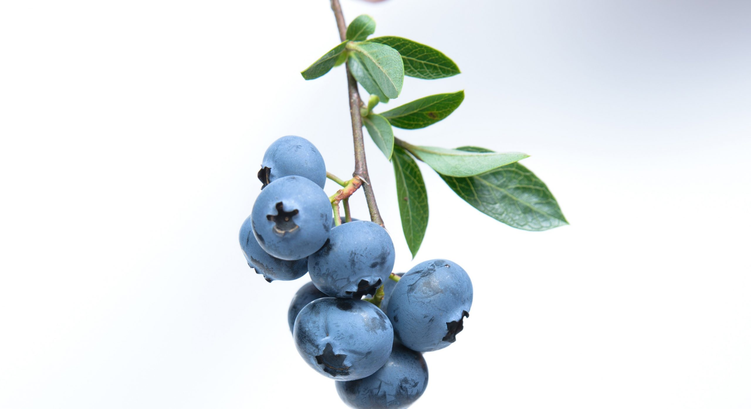 Can a Compound from Berries Treat Inflammatory Disorders?
